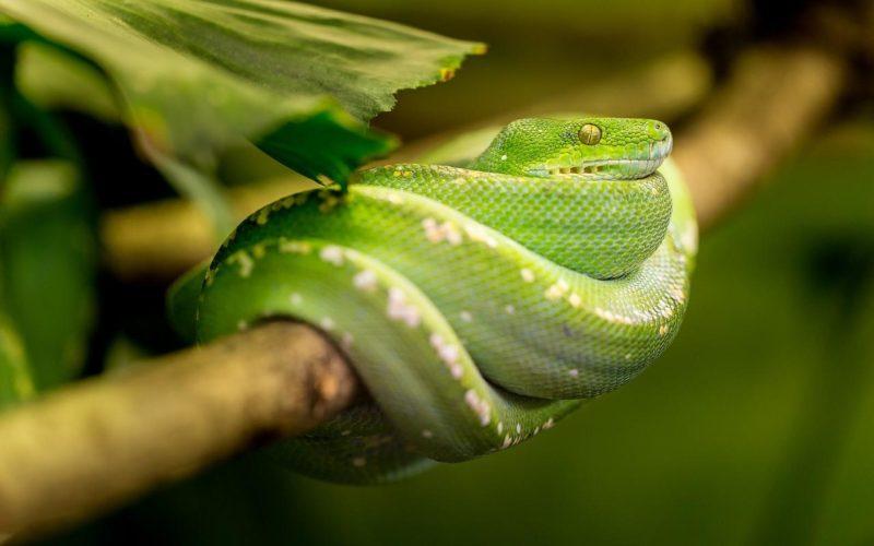 Reptilienfütterung