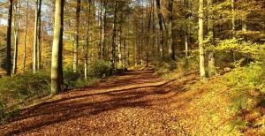 Urlaub im Westerwald