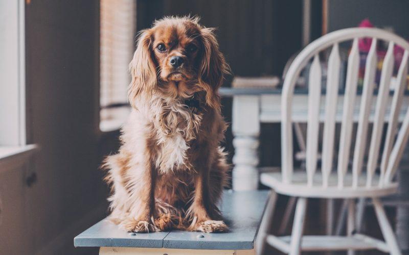 Hunde Indoor Aktivitäten